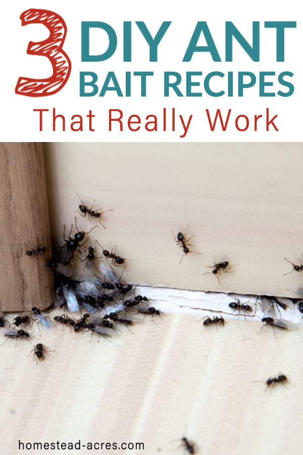 DIY Ant Bait Recipes That Work text overlaid on a photo of black ants in a home.