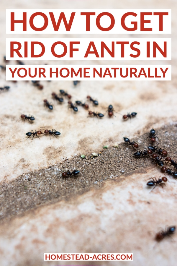How To Get Rid Of Ants In Your Home Naturally text overlaid on a photo of ants crawling on a patio.