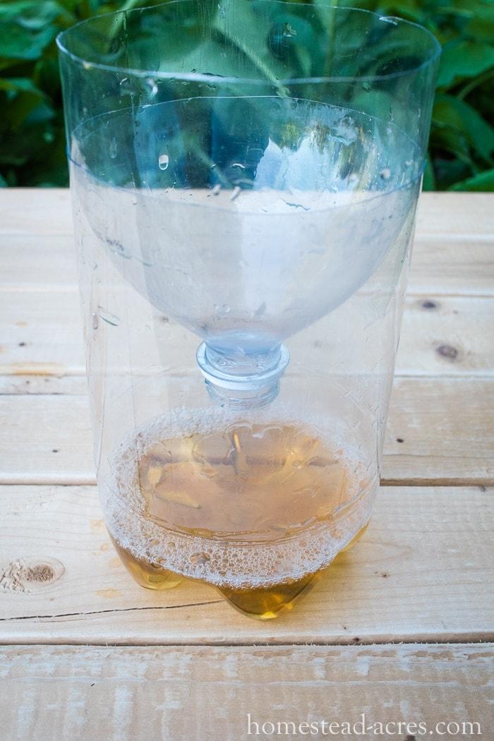 DIY Fruit Fly Trap With Apple Cider Vinegar