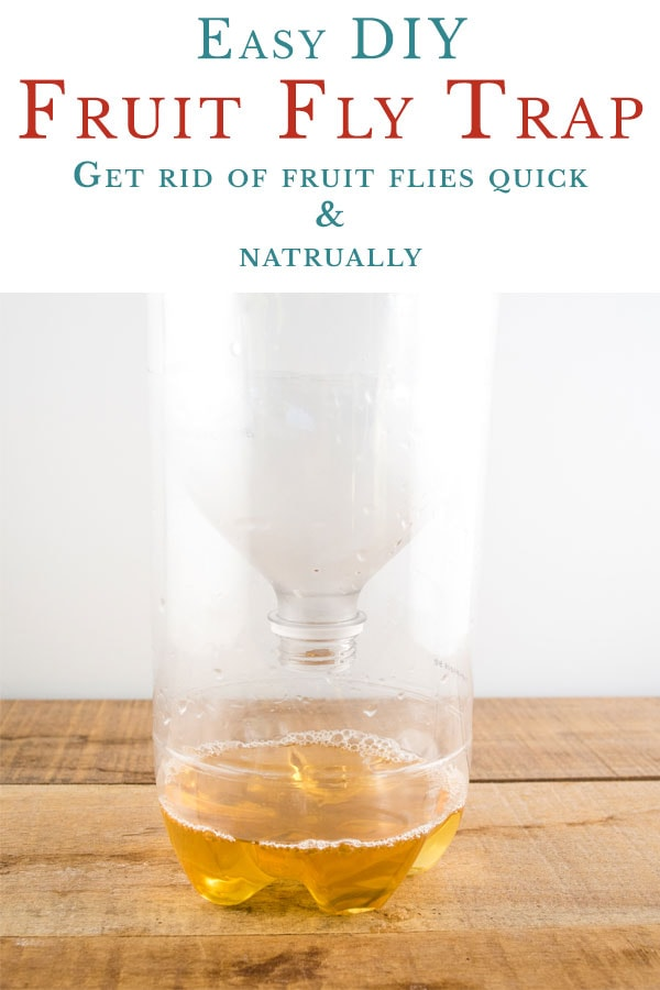 Easy DIY Fruit Fly Trap. Make your own homemade fruit fly trap to get rid of them fast.