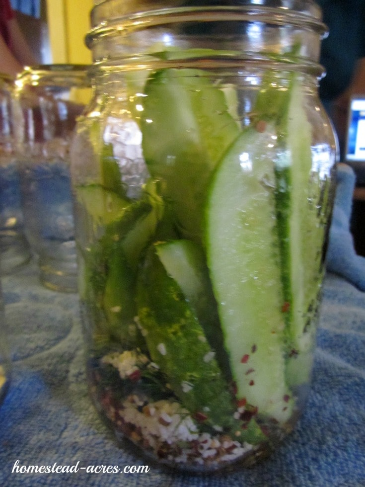 Fill your canning jars with brine | www.homestead-acres.com
