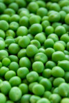 How to can peas | www.homestead-acres.com