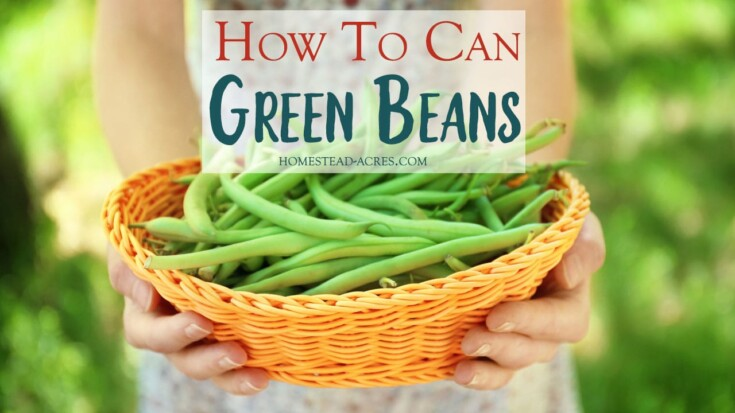 How To Can Green Beans Cold Pack