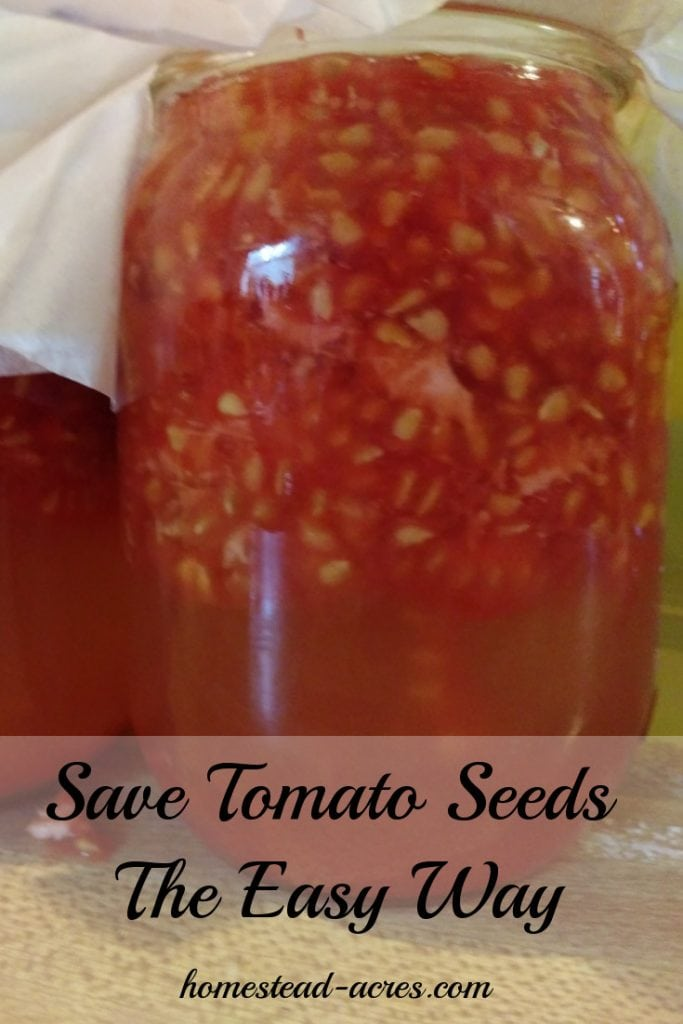 It's so easy to save tomato seeds! I love to save my own heirloom tomato seeds from my garden every year. It save money and helps to preserve tomato varieties. Learn wow to save your own tomato seeds from your backyard garden.