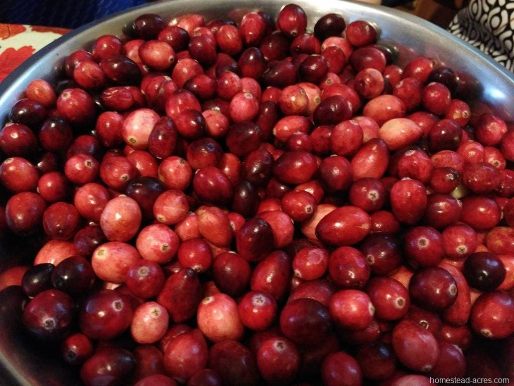 Cranberries sorted and ready to make sauce. | www.homestead-acres.com