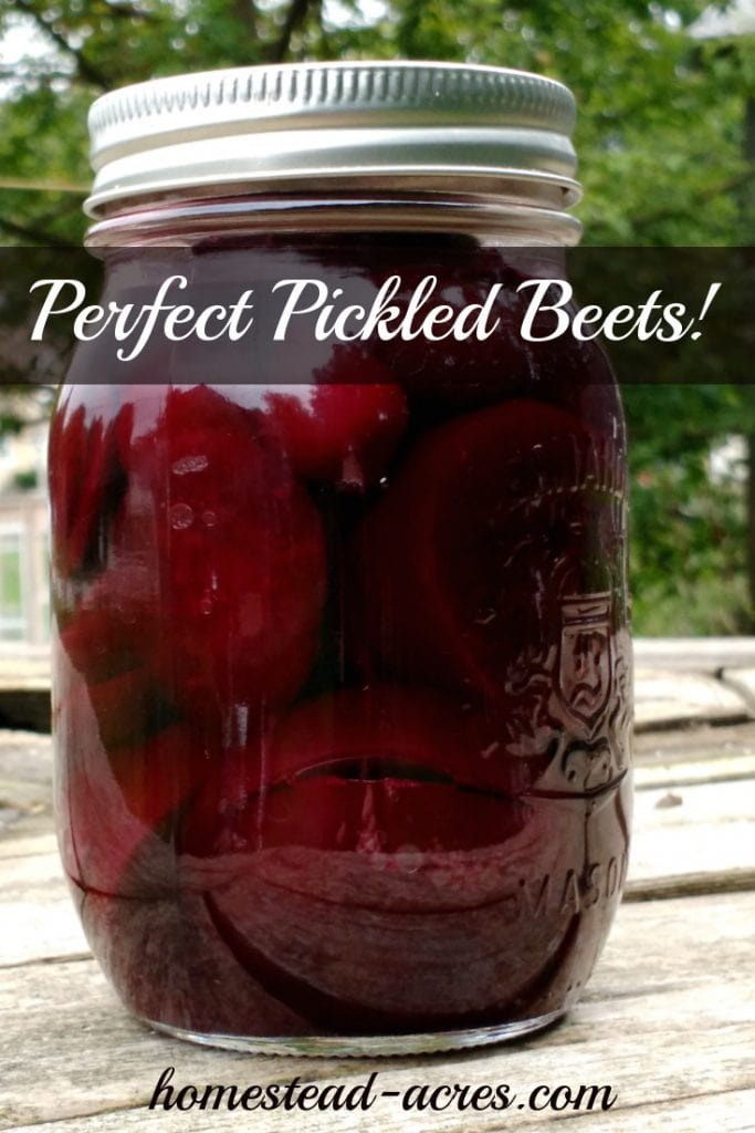 A jar of homemade canned pickled beets sitting on a wooden table out side. Text on image reads Perfect Pickled Beets.