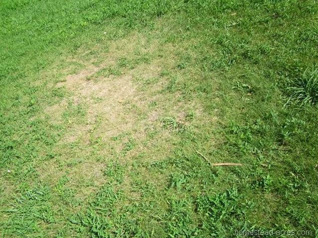 Hot Weather & Garden Updates