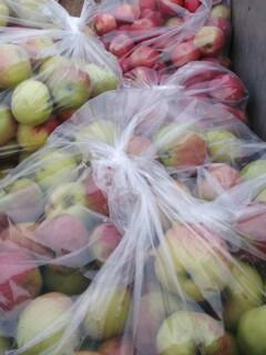 Fresh Apples From The Apple Farm