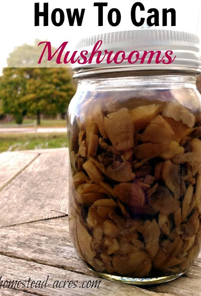 How To Can Mushrooms. Canning your own mushrooms is so easy to do and they taste amazing! So much better then store bought. This is a great addition to your pantry food storage. | www.homestead-acres.com