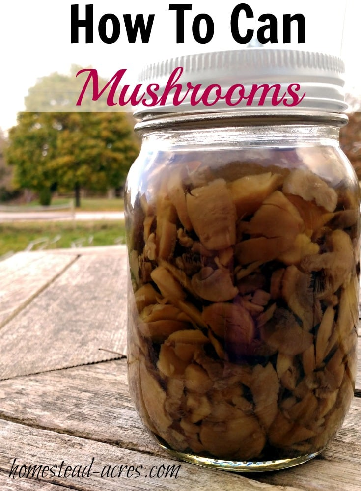 How To Can Mushrooms. Canning your own mushrooms is so easy to do and they taste amazing! So much better then store bought. This is a great addition to your pantry food storage.   www.homestead-acres.com
