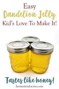 I love dandelion jelly! This is such a easy jelly recipe for beginner canners. Enjoy making this fun and unique flower jelly with your kids. Step by step photos makes this the perfect unusual jelly to get started with. It tastes just like honey and is sure to be enjoyed!