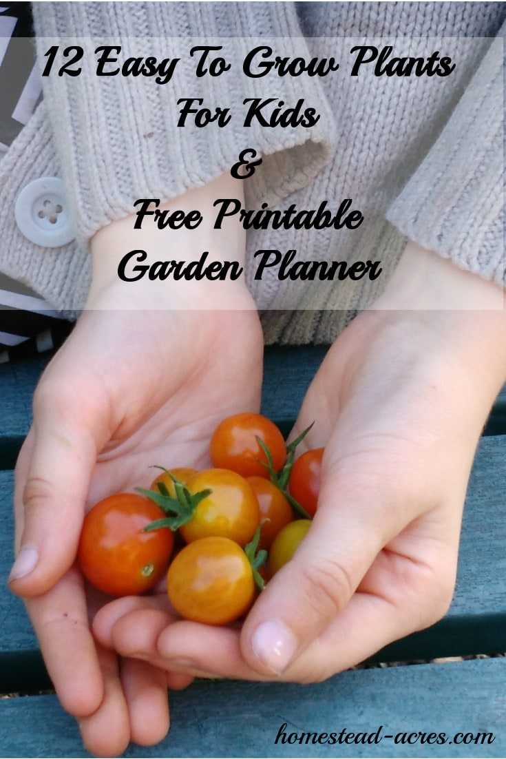Do you have a hard time getting your children to eat vegetables? Your not alone! I used to really struggle with this but I learned the easiest way to get children excited about eating vegetables is to let them help grow their own food! Download your free printable garden planner for kids and get started with this list of 12 easy plants for children to grow.