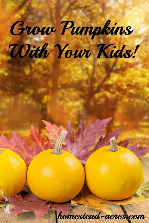 My children just love to grow pumpkins! Get your free printable garden planner for kids and learn about 12 must grow plants!   www.homestead-acres.com