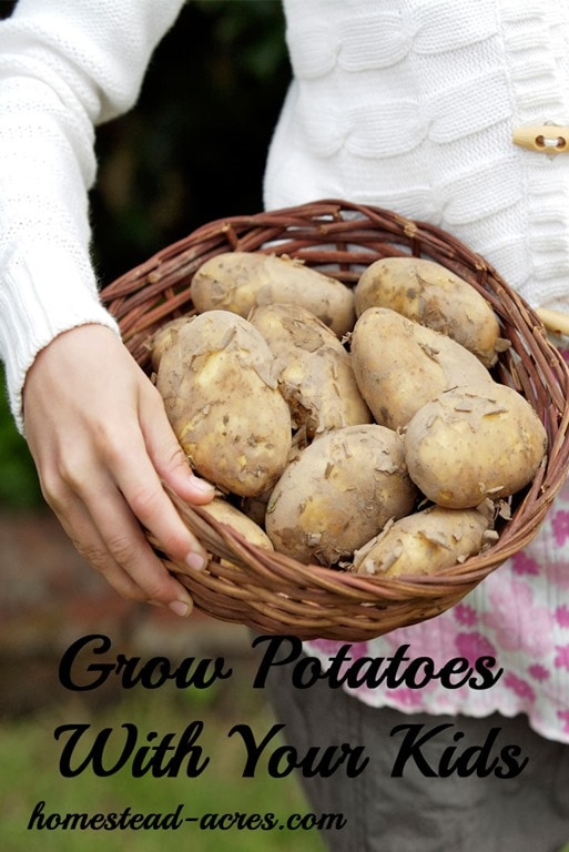 My children just love to grow potatoes! Get your free printable garden planner for kids and learn about 12 must grow plants!   www.homestead-acres.com