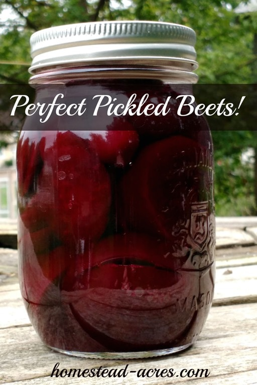 Perfect pickled beets! This is my Grandmothers recipe I've been enjoying since I was a little girl. So easy to make and can to enjoy all year. | www.homestead-acres.com