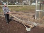 Homestead Series Planting Garlic
