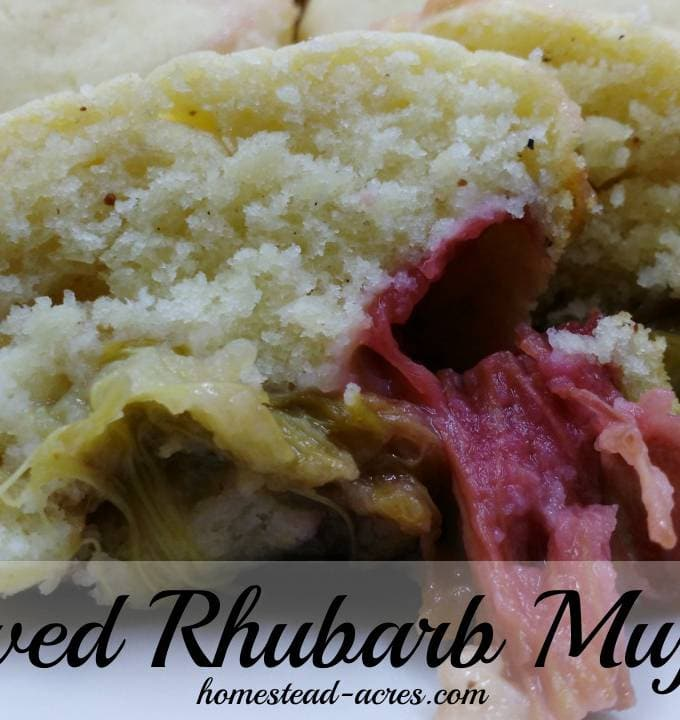 rhubarb muffins cover
