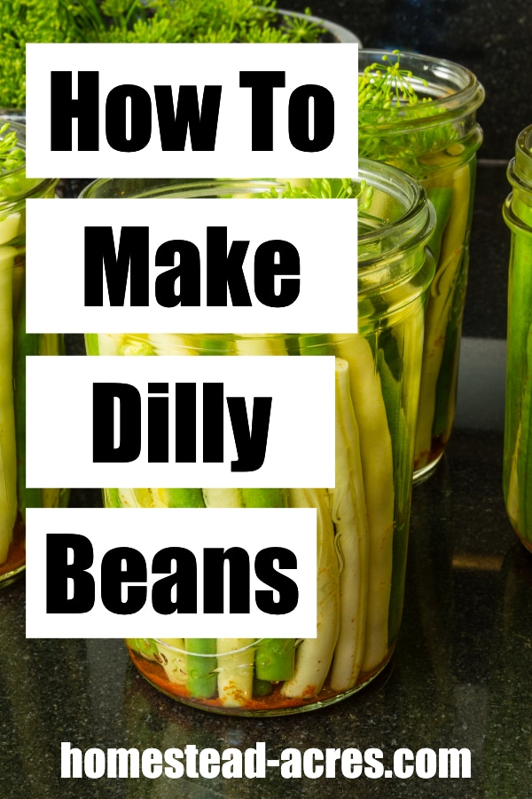 How To Make Dilly Beans text overlaid on a photo of jars filled with yellow and green beans.
