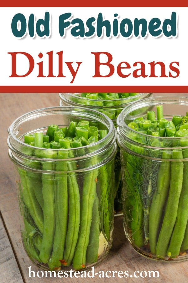 Old Fashioned Dilly Beans
