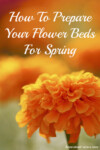 How to prepare your flower beds for spring in 5 easy steps. A little time spent in the garden this fall will get your flowers off to a great start next spring! | www.homestead-acres.com