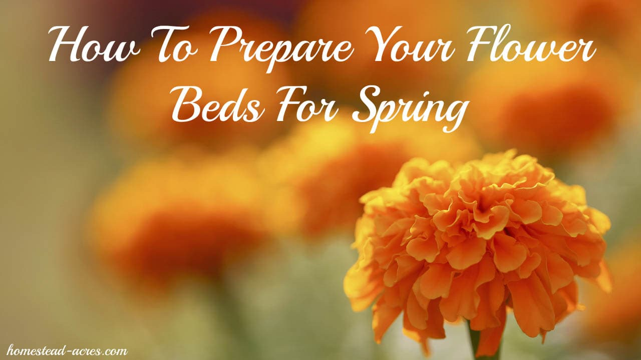 How to prepare your flower beds for spring homestead acres for Preparing for spring