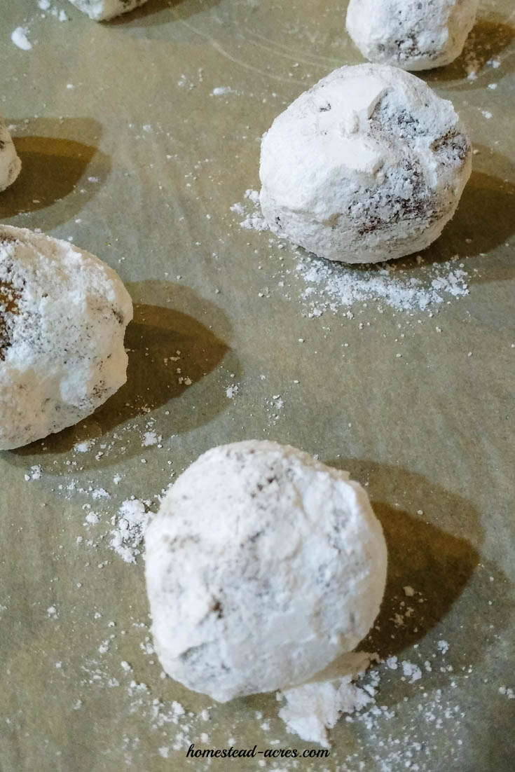 Ginger Crinkle Cookie dough balls on a baking sheet | www.homestead-acres.com