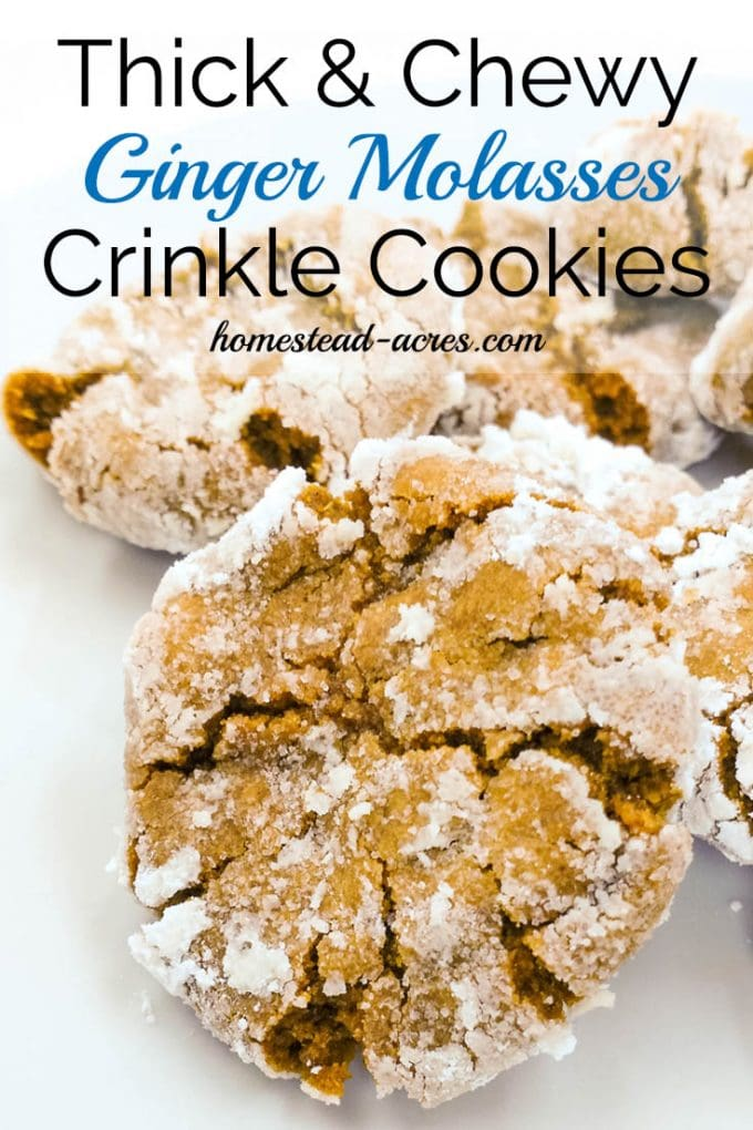 The best Ginger Molasses Crinkle Cookies ever! Really, these are thick, soft and chewy gingerbread type cookies coated in powdered sugar. The perfect Christmas cookie. | www.homestead-acres.com