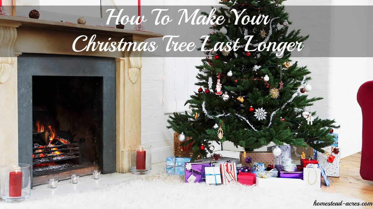 How to make your christmas tree last longer homestead acres - Make christmas tree last longer ...