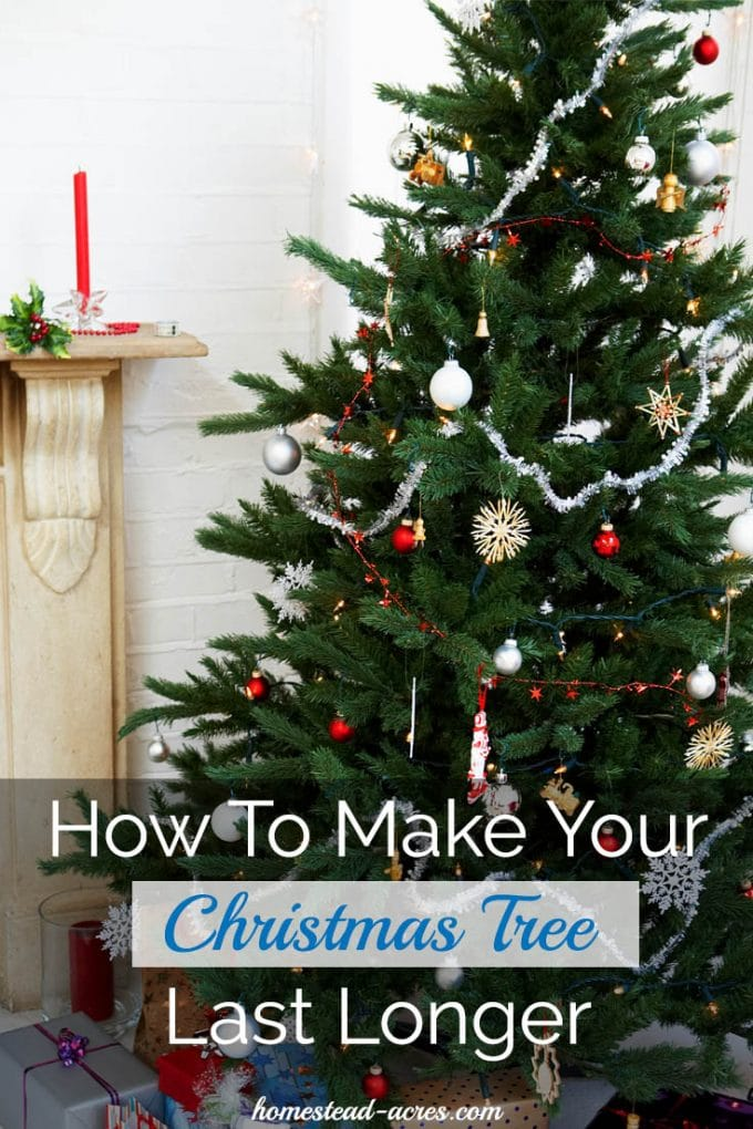 How To Make Your Christmas Tree Last Longer. Easy tips you can do to keep your Christmas tree healthy and beautiful all through the season. | www.homestead-acres.com