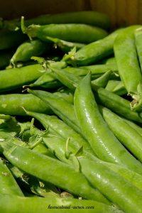 Growing snap peas www.homestead-acres.com