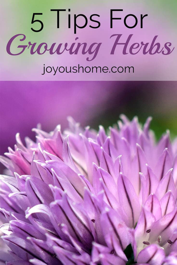 5 Tips For Growing Herbs. Get your herb garden off to a great start with these easy tips.
