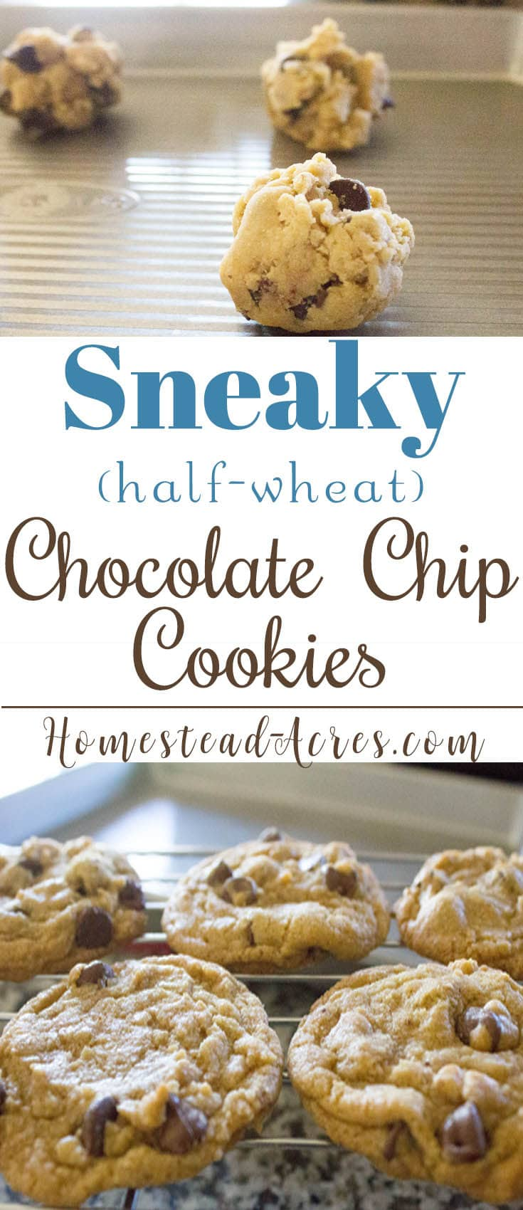 Perfectly Sneaky Chocolate Chip Cookies. Enjoy a healthier chocolate chip cookie with this recipe using half whole wheat flour. So yummy, knowone will ever know! www.homestead-acres.com