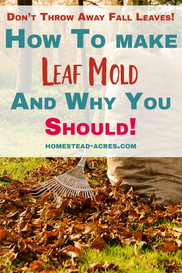 how to make leaf mold and use in your garden