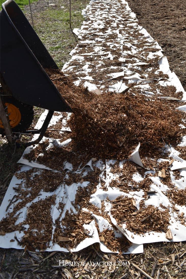 Back to Eden gardening cover the newspaper with wood chips.