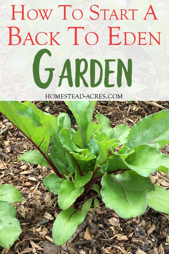 Beets growing in wood chip mulch. Text overlay says How To Start A Back to Eden Garden.