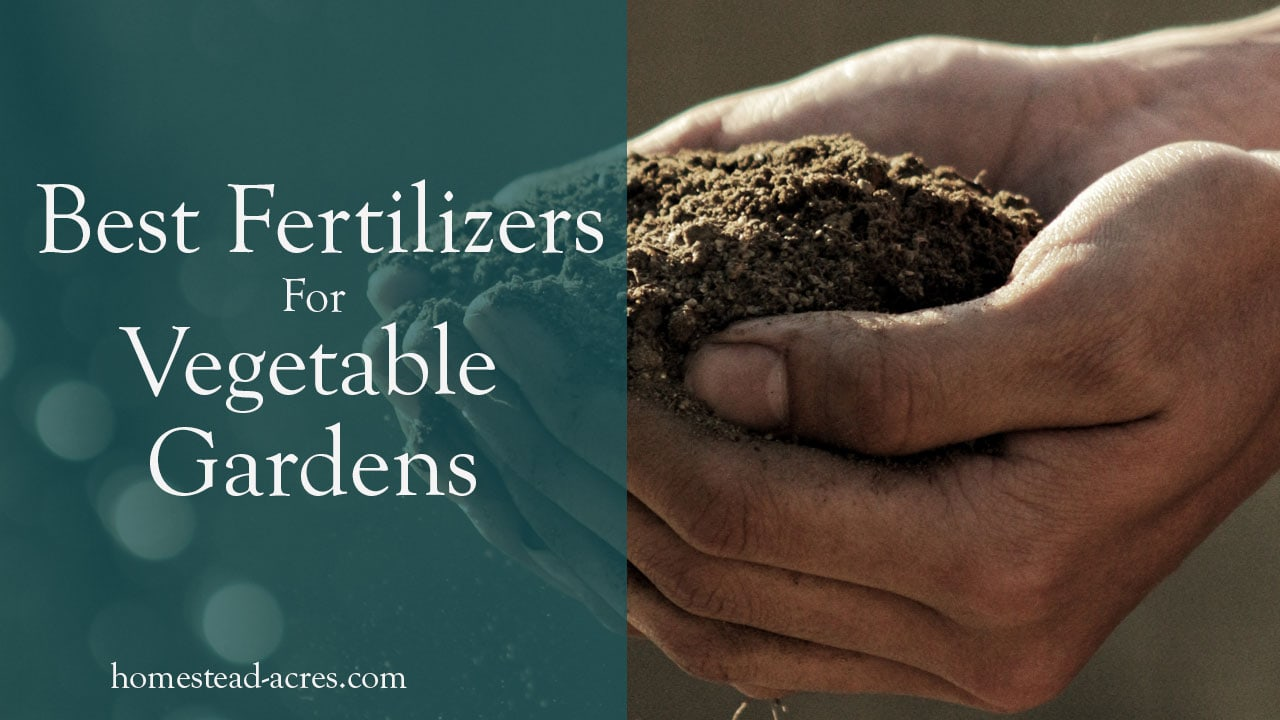 10 Best Organic Fertilizers For Your Vegetable Garden Homestead Acres