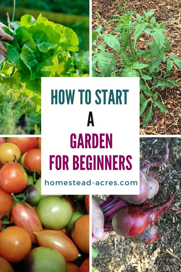 How To Start A Vegetable Garden For Beginners text overlaid on a photo collage of lettuce, tomatoes and beets growing in a garden.