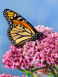 Best Flowers For Your Butterfly Garden