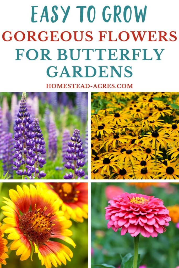 Easy to grow gorgeous flowers for butterfly gardens.
