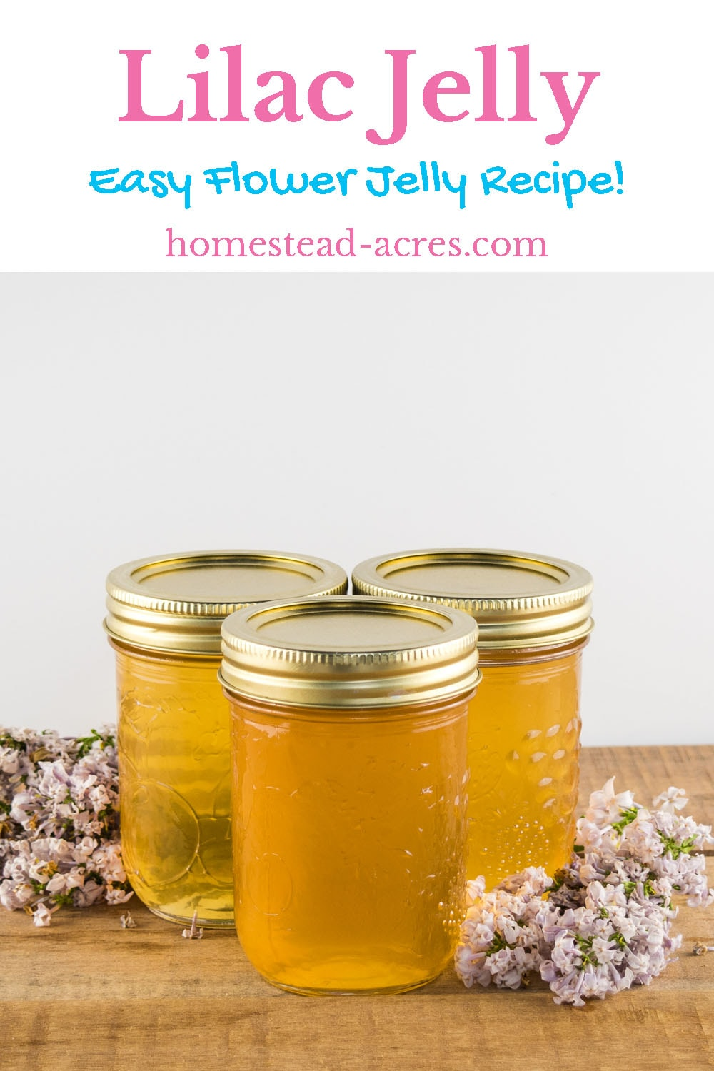 Lilac Jelly - Easy Flower Jelly Recipe! text overlaid on top of a photo of yellow lilac jelly in canning jars sitting on a table with lilac flowers.