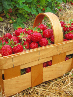 How Many Strawberries In A Cup and other strawberry measurements