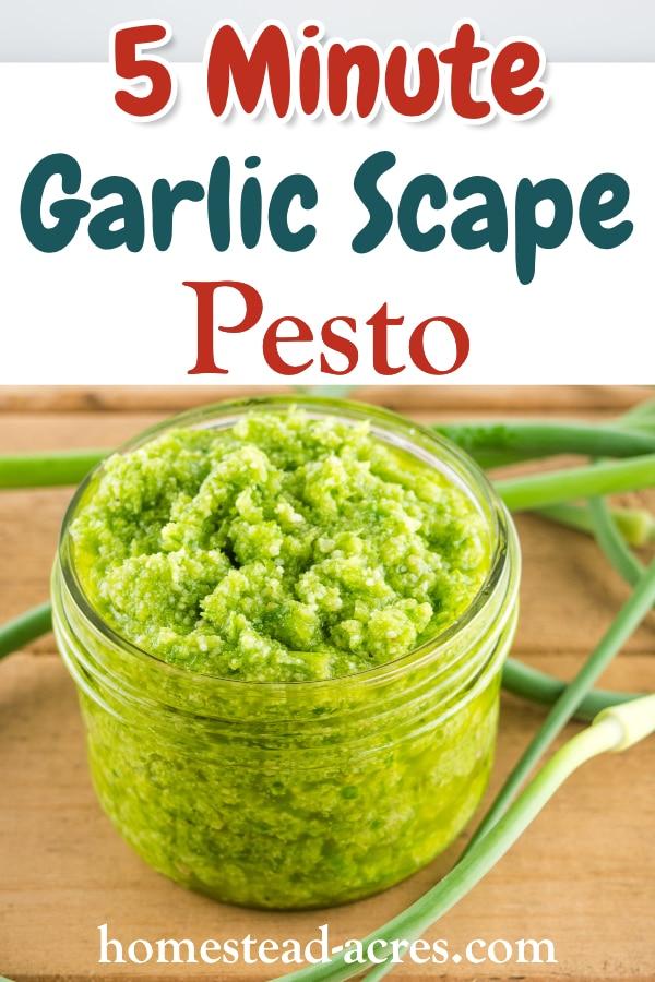 5 Minute Garlic Scape Pesto text overlaid on a photo of garlic scape pesto in a glass jar.