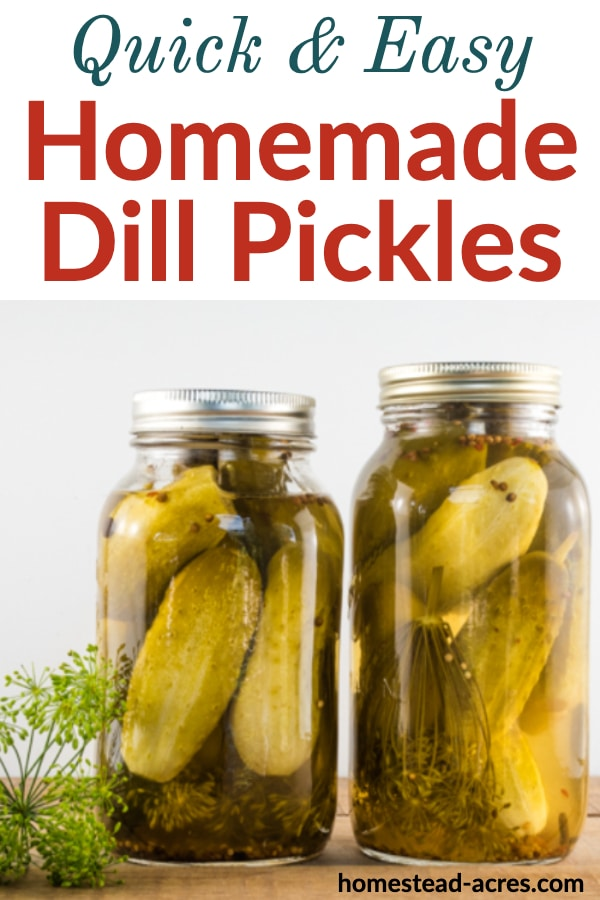 Quick and Easy Homemade Dill Pickles text over a photo of 2 jars of dill pickles on a wooden table and a sprig of dill on the left side.