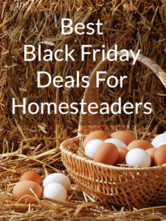 Basket of white and brown eggs on a straw bale. Text overlay says Best Black Friday Deals for Homesteaders.