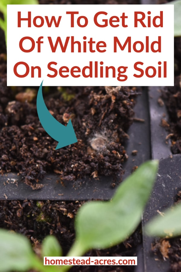 How To Get Rid Of White Mold On Seed Starting Soil Homestead Acres