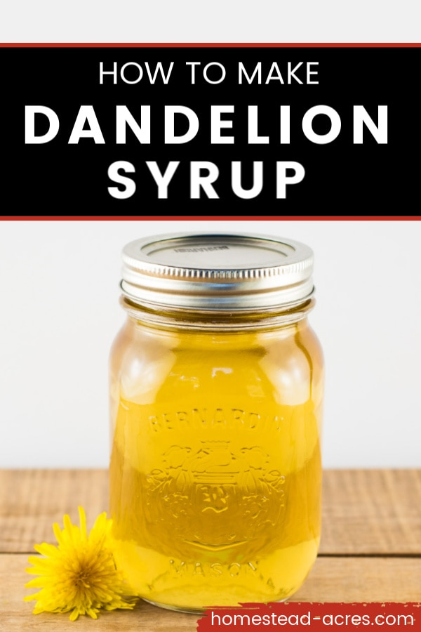 How To Make Dandelion Syrup text overlaid on a photo of a mason jar filled with dandelion syrup sitting on a wooden table with a dandelion flower next to the jar.