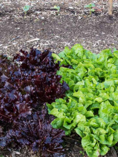 Choosing the best vegetable garden location