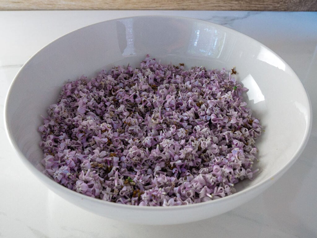 White bowl filled with purple lilac flowers.